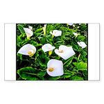 Field of Calla Lily Flowers Sticker