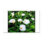 Field of Calla Lily Flowers Rectangle Car Magnet