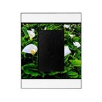 Field of Calla Lily Flowers Picture Frame