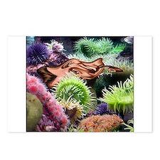 LeMur's Sea Dobbshead Postcards (Package of 8)