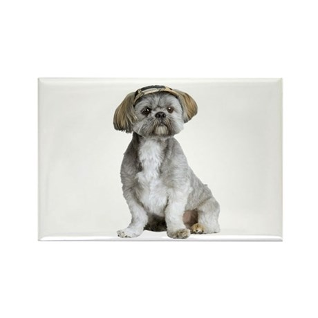 Shih Tzu Picture - Rectangle Magnet (10 pack)