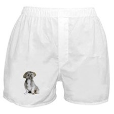 Shih Tzu Picture - Boxer Shorts