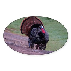 Strutting Tom Turkey Oval Sticker (10 pk)