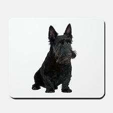 Scottish Terrier Picture - Mousepad