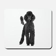 Poodle Picture - Mousepad