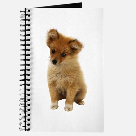 Pomeranian Picture - Journal