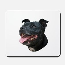 Pit Bull Picture - Mousepad