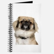 Pekingese Picture - Journal