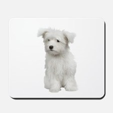 Maltese Picture - Mousepad