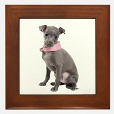 Italian Greyhound Picture - Framed Tile