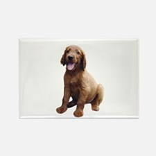 Irish Setter Picture - Rectangle Magnet (10 pack)