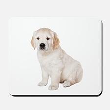 Golden Retriever Picture - Mousepad