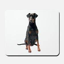 Doberman Pinscher Picture - Mousepad