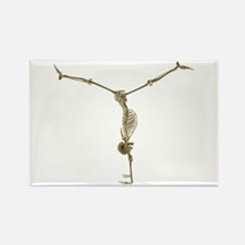 Skeleton Rectangle Magnet (10 pack)