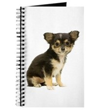 Chihuahua Picture - Journal