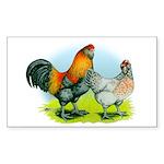 Ameraucana Chickens Rectangle Sticker 50 pk)