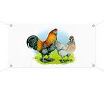 Ameraucana Chickens Banner