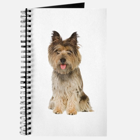 Cairn Terrier Picture - Journal