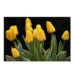 Yellow Tulips Postcards (Package of 8)