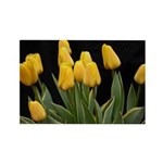 Yellow Tulips Rectangle Magnet