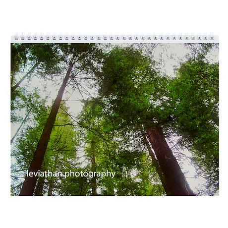 California Redwoods 2013 Wall Calendar
