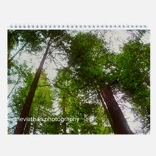California Redwoods Wall Calendar