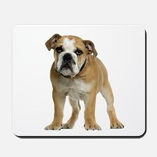 Bulldog Picture - Mousepad