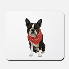 Boston Terrier Picture - Mousepad