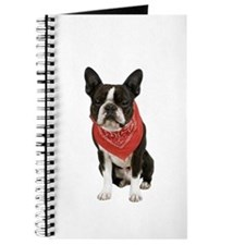 Boston Terrier Picture - Journal
