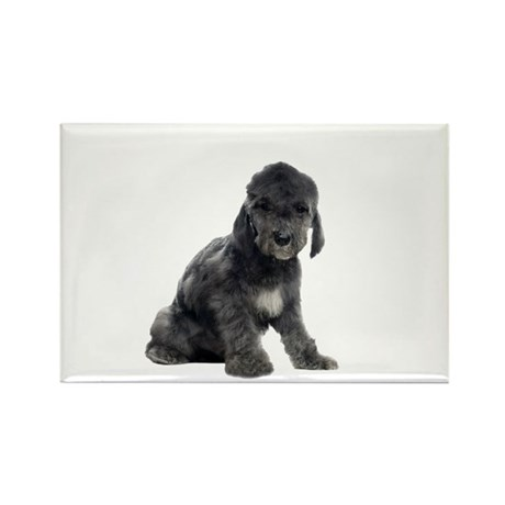 Bedlington Terrier Picture - Rectangle Magnet (10