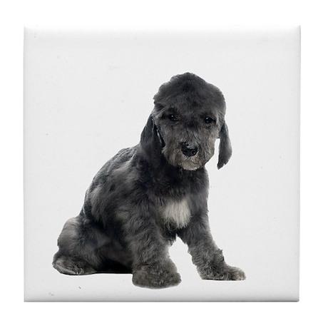 Bedlington Terrier Picture - Tile Coaster