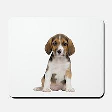 Beagle Picture - Mousepad