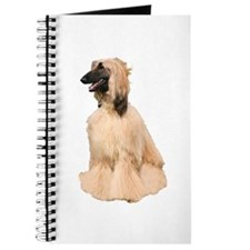 Afghan Hound Picture - Journal