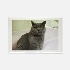 Unique British shorthair Rectangle Magnet