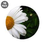 Daisy 3.5