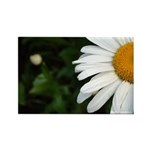 Daisy Rectangle Magnet (100 pack)