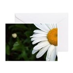 Daisy Greeting Cards (Pk of 20)