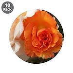 Orange Rose 3.5