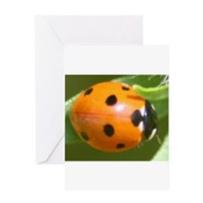 Ladybug Beetle Greeting Card