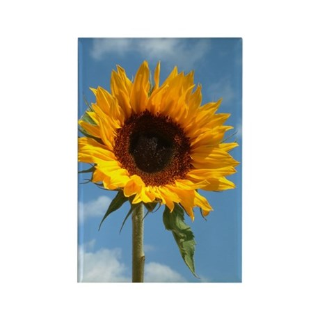 Sunflower Rectangle Magnet (10 pack)