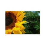 Edge Of A Sunflower Rectangle Magnet (100 pack)