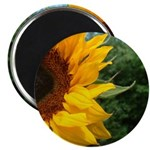 Edge Of A Sunflower Magnet