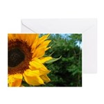 Edge Of A Sunflower Greeting Cards (Pk of 10)