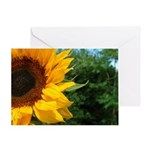 Edge Of A Sunflower Greeting Card