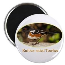 Rufous-sided Towhee Magnet