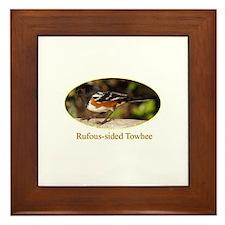 Rufous-sided Towhee Framed Tile