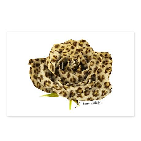 Leopard Rose Postcards (Package of 8)