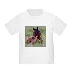 Foal T