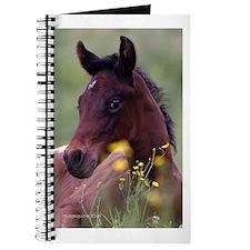 Foal Journal