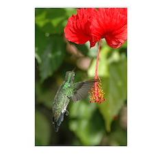 Hummingbird Postcards (Package of 8)